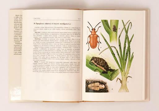 Atlas chorôb a škodcov zeleniny